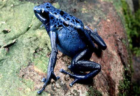 colored poisonous frogs animals in the world
