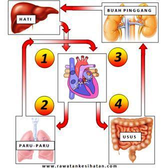 Kesan kelemahan injap jantung mengoptimumkan fungsi organ yang berhampiran