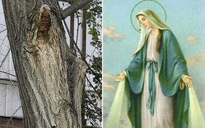 Virgin Mary spotted in a tree Illusion