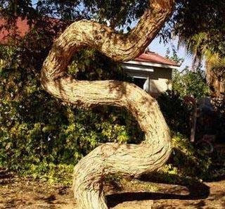The Snake Tree Optical Illusion