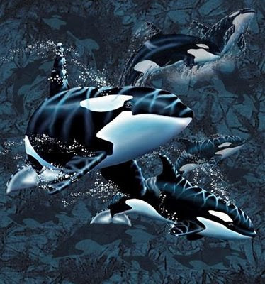 Find 13 Orcas Illusion