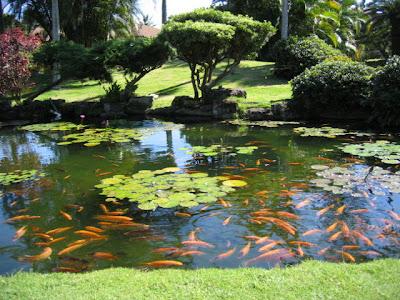 Koi Pond at the Pono Kai Resoort