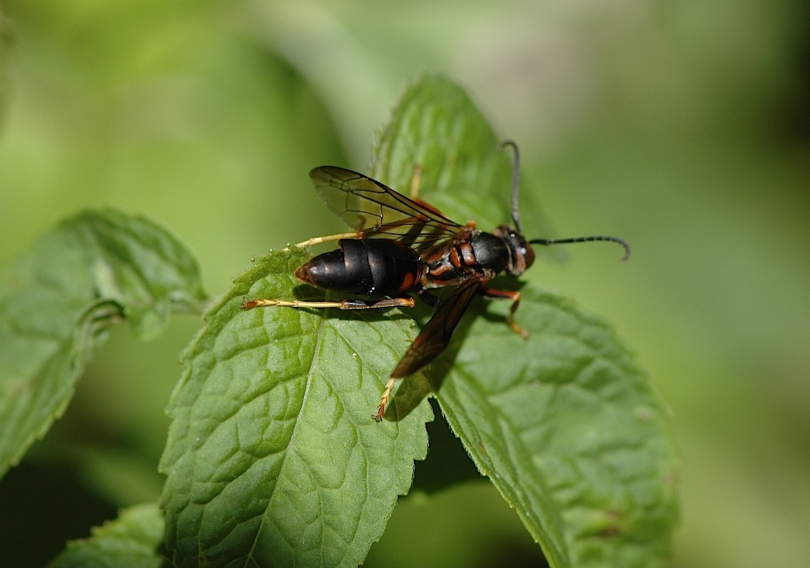 paper wasps Learn safe, natural wasp sting treatment here wasp stings are a real hazard, and worth some research this article details types of wasps, as well as wasp sting treatment, natural remedies, causes, prevention, symptoms and more.