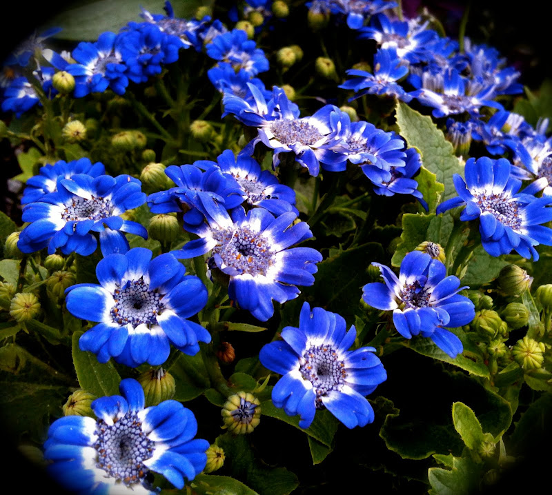 Blue Flowers title=