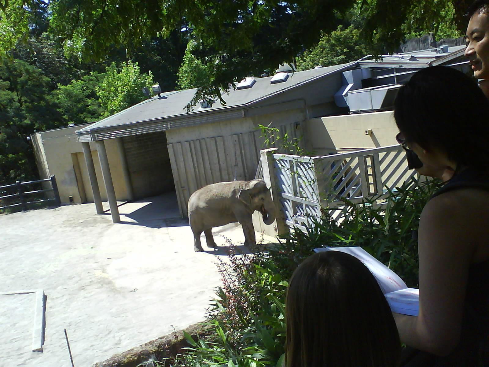[Elephant+1]