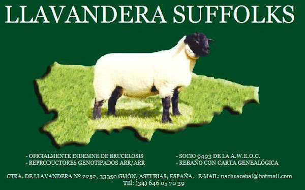 LLAVANDERA SUFFOLKS