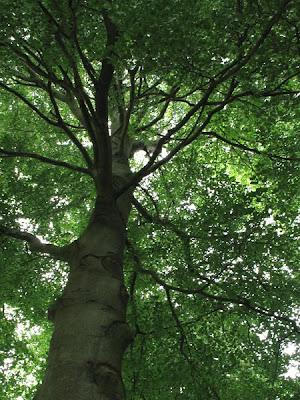 L'arbre - Franc-Waret - Belgique - Anne-Sarine Limpens - 2008