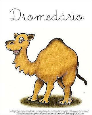 Dromed%C3%A1rio+1 Alfabeto aprendendo com os animais para crianças