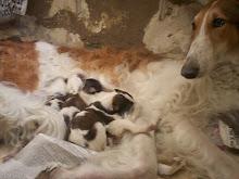Gala y sus cachorros
