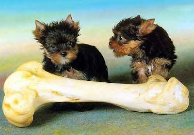 foto cachorros humor