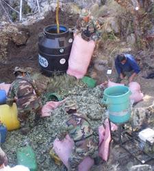 tres policías destruyen un emplazamiento de maceración de coca