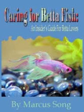 Betta Fish Bible