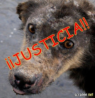 Justicia para Callejerito