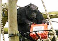 chimp cam