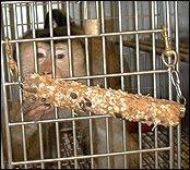 monkey starves