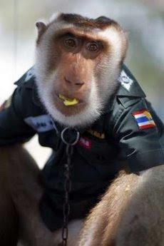 monkey police patrol