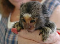 captive primate safety act