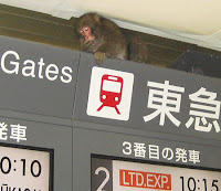 monkey tokyo station