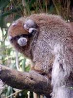 monkey born salisbury