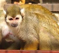 deanna monkey