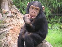chimp bites finger off