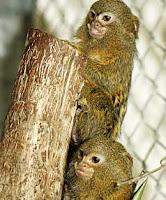 machu monkey