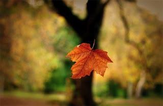 http://3.bp.blogspot.com/_-kXdxyhXBjQ/SbX16xPQ75I/AAAAAAAAADA/oEI-HLiBTKo/s320/leaf1.jpg