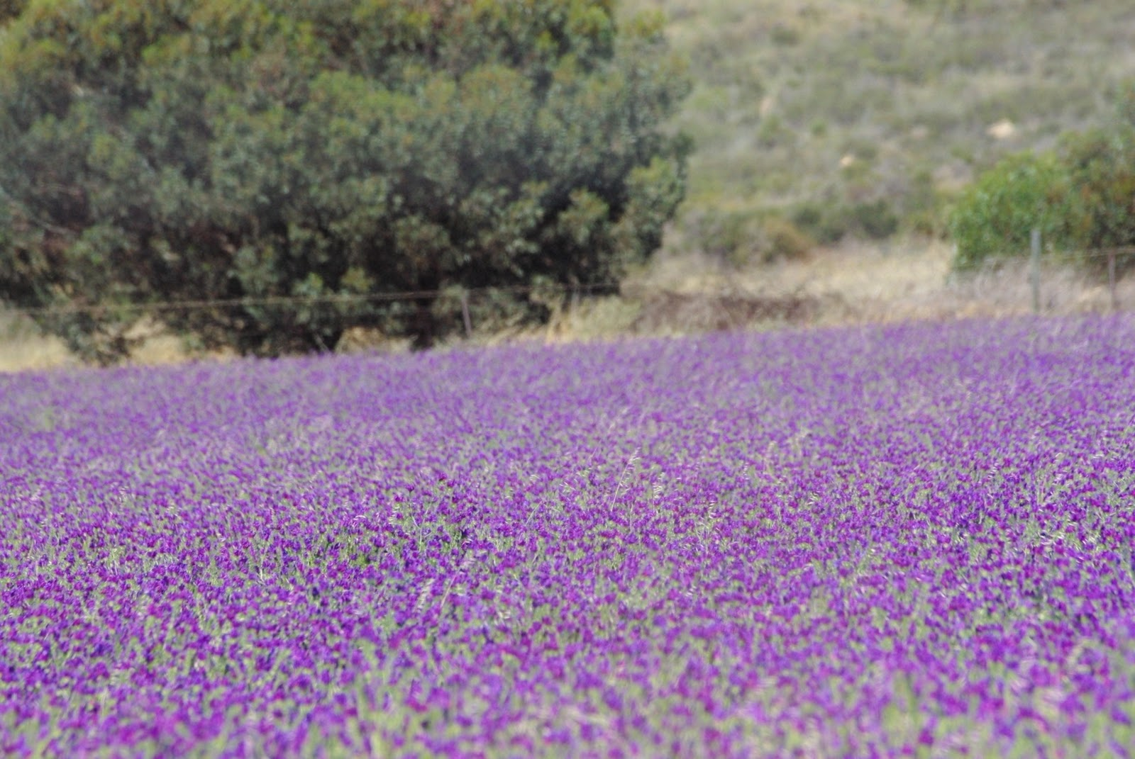 Me Si Adventures Spring Flowers In Western Australia