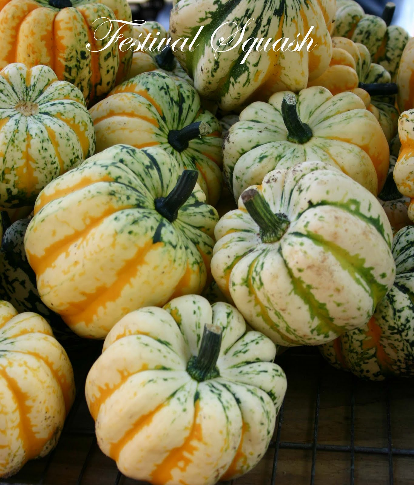 A FARMERS MARKET JOURNEY: EYE CANDY AT THE MARKET