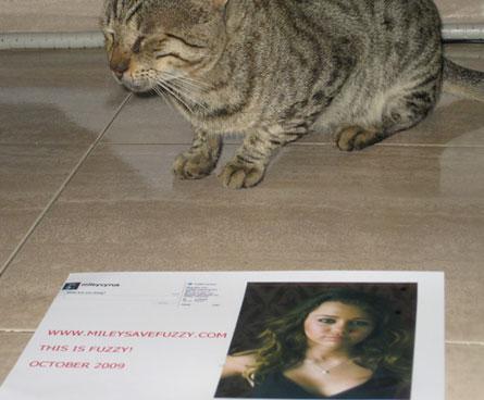 un fan: miley, torna su twitter o mangio il mio gatto