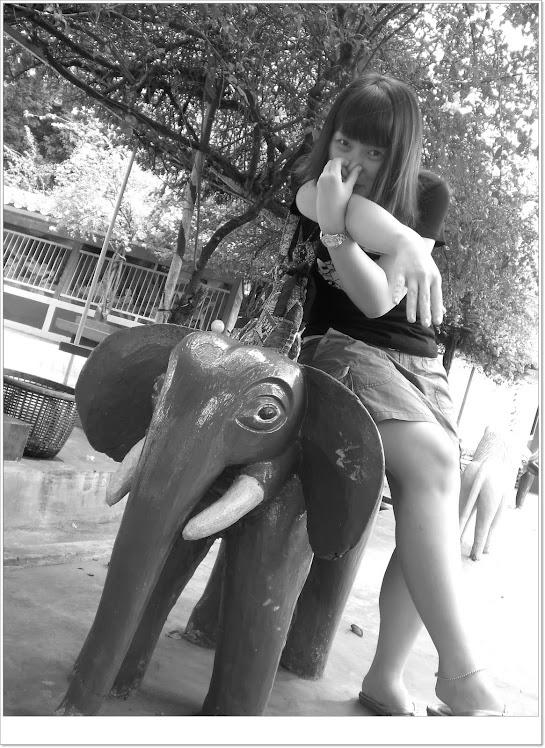 大象。。大象。。