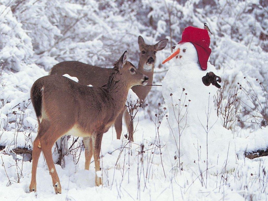 http://3.bp.blogspot.com/_-mY2ck9YCeE/TQp8nkABODI/AAAAAAAACBA/yf02XcdpJxA/s1600/Deer_with_Frosty.jpg