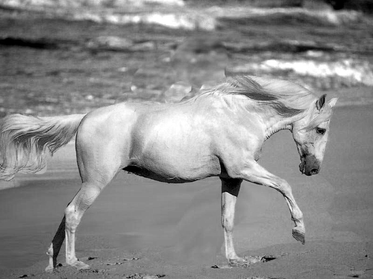 Horse Valentines