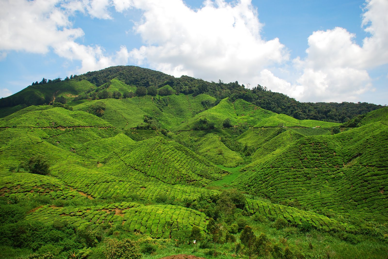 Cameron Highlands Malaysia  City new picture : The Great Escapade: Cameron Highlands, Malaysia