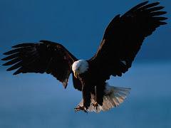 هل تعرف معنى الحرية ؟!