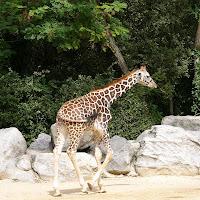 gambar binatang, wallpaper hewan