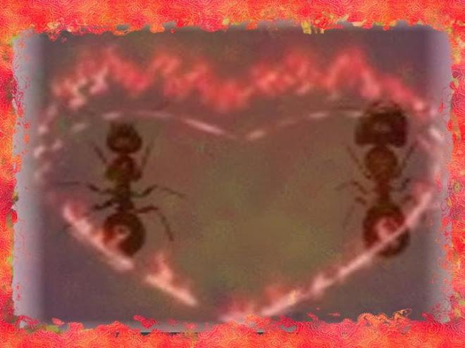 As Formigas-3