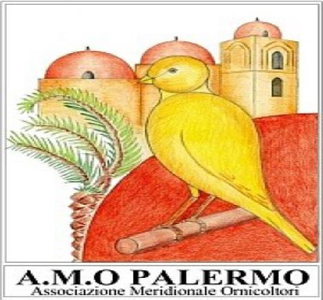 A.M.O Palermo (collegamento virtuale www.amopa.it)