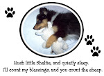 My Cafepress Store: The Tri-Color Sheltie Store and More!
