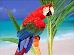Parrots Of Brasil