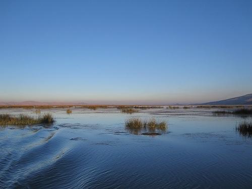 Schilf Horizont Titicacasee