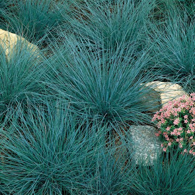 Ghetto gardens ornamental grasses for Short ornamental grasses full sun