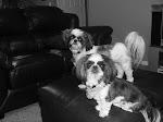 Barkley & Milo