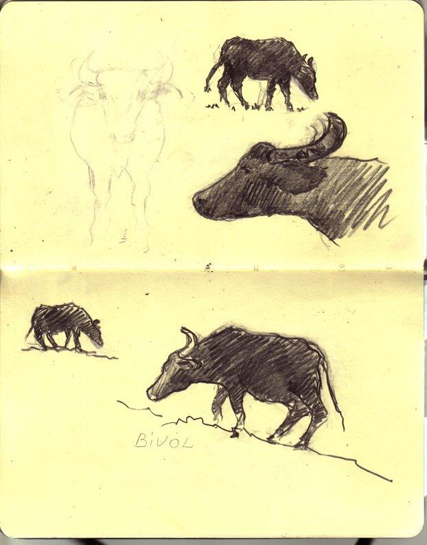 bivol