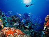 imagem fundo do mar