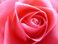 Rosapaper
