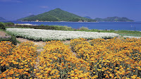 Flores e mar