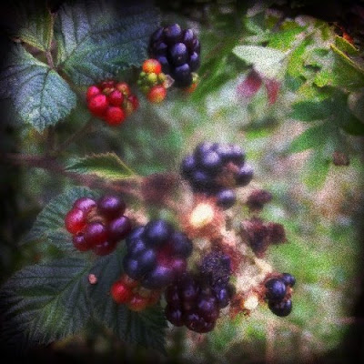 holga blackberries