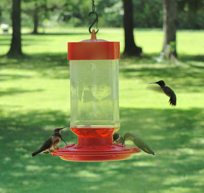 hummingbirds, nectar, hummingbird feeder