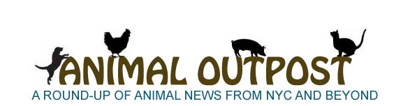 Animal Outpost